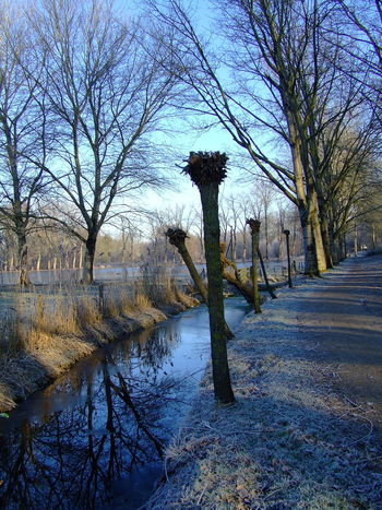 Tree Reflection Nature Sky Water No People Outdoors Beauty In NatureLandscape Growth Helmond Tranquility Branch Day