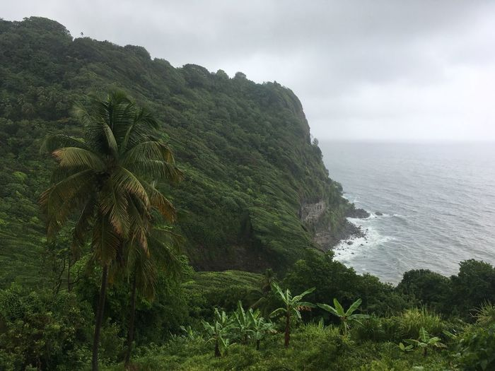 Dominica Beauty In Nature Day Growth Horizon Over Water Nature No People Outdoors Plant Scenics Sea Sky Tranquil Scene Tranquility Tree Water