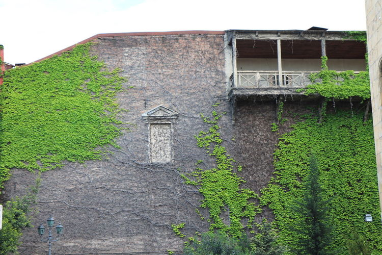 #balcony #Georgia #green #home #housewall #Tbilisi #wall #Windows