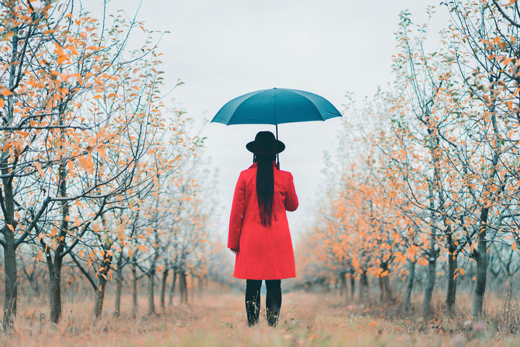 Woman in red coat and with umbrella between trees in apple garden at autumn season. Minimalism, travel, nature concept. Tree Umbrella One Person Real People Plant Standing Protection Red Lifestyles Nature Women Day Clothing Rear View Adult Casual Clothing Leisure Activity Full Length Change Outdoors Obscured Face Rain