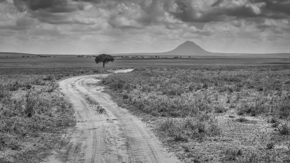 taken @Tarangire National Park - Tanzania Tanzania Tanzanianationalparks Tarangire Africa B&w Landscape Nature No People Outdoors Road Tarangire National Park Tranquil Scene Tranquility Tree