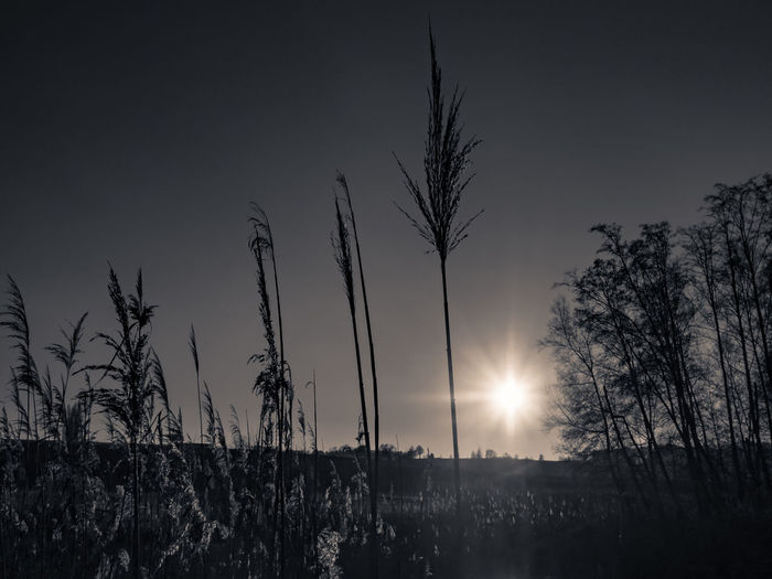 Atmosphere Blackandwhite Lake View Monochrome Mystery Nature Outdoors Sea Silhouette Sun Sunrise... Olympus OM-D E-M5 Mk.II