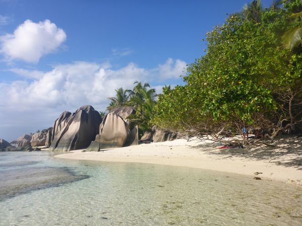 Best beaches in the world : Anse Source D´Argent Coral Reef Islandhopping Seychelles La Digue Granite Boulders Seychellen Seychelles Anse Source D'argent Sand Beach Nature Sea Tree Water Day Beauty In Nature