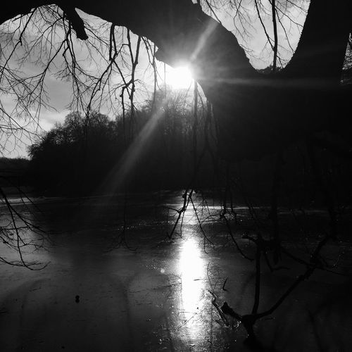 Tree Sun Sunlight Sky Beauty In Nature Nature Dimensionofthenature