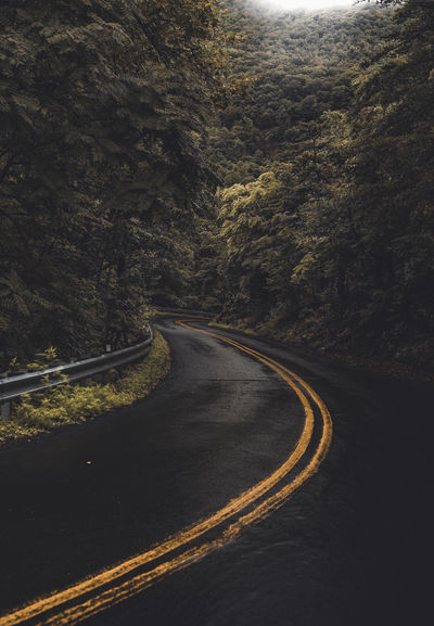 Winding through the Jungles of Appalachia Dark EyeEm Best Shots EyeEm Nature Lover Nature Nature Photography Road Travel Photography Weather Backroads Forest Haze Lush Foliage Moody Moody Photography Mountain Nature_collection Roadscapes Valley Wet Winding Road Yellow Lines In The Road