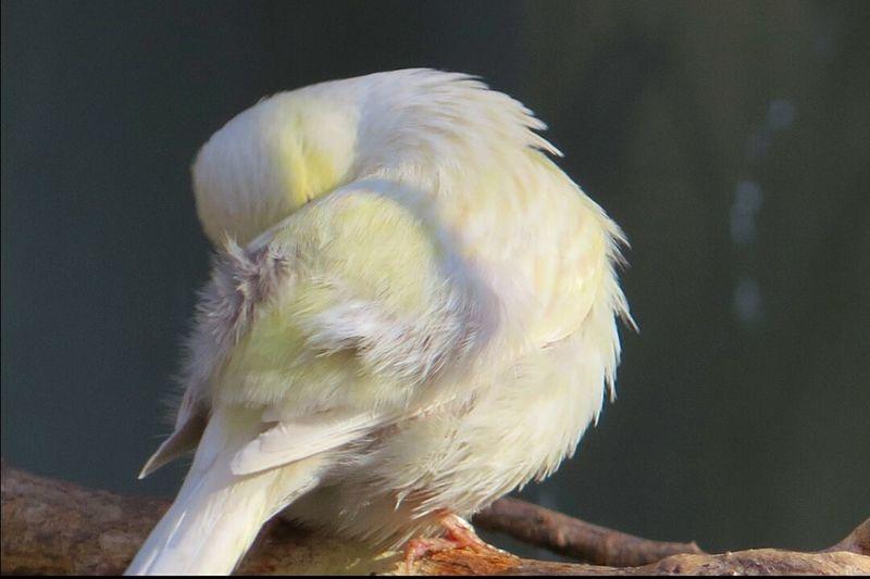 Bird Lover Bird Photography Beautiful Animals  Bird Lovers Birds_collection Springtime Sleeping Bird