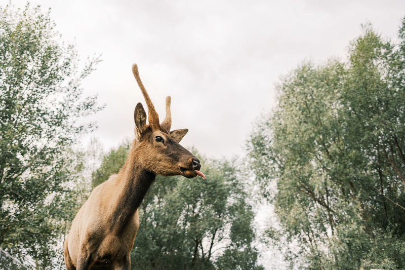 Low angle view of deer standing by trees against sky