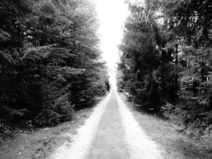 Tree The Way Forward Road Tranquil Scene Nature Tranquility Scenics Growth Non-urban Scene Beauty In Nature Outdoors Diminishing Perspective Day Remote Solitude Empty Road Vanishing Point WoodLand Long No People Beauty In Nature Simple Photography Monochrome Photography MonochromePhotography Taking Photos