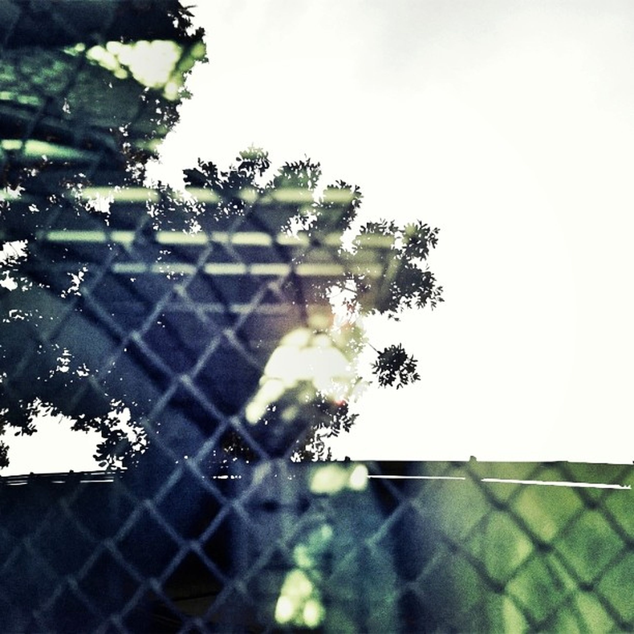 growth, plant, close-up, sky, leaf, sunlight, focus on foreground, fence, clear sky, wall - building feature, nature, day, tree, building exterior, pattern, built structure, outdoors, no people, low angle view, architecture