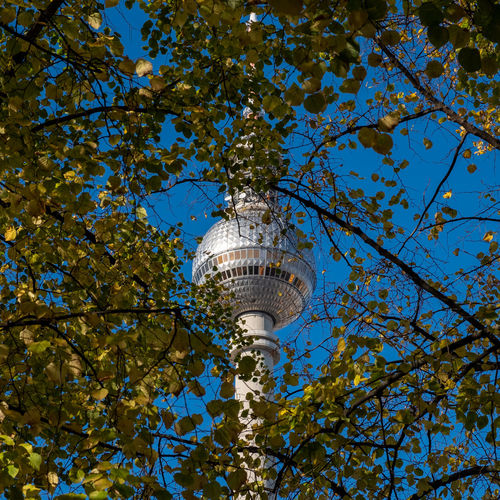 Autumncity Architecture Built Structure Building Exterior Plant Tree Outdoors No People Nature Day Ralfpollack_fotografie Fujix_berlin Low Angle View Sky Tower Travel Destinations Tall - High Travel Blue Building Fernsehturm Berlin  Berlin Photography Autumn Mood