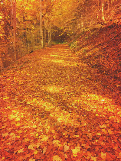 Autumn path Herbstblatt
