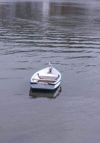 Seagull perched on a small boat Boat Day High Angle View Mode Of Transport Moored Nature Nautical Vessel No People Outdoors Reflection Seagull Single Boat Water