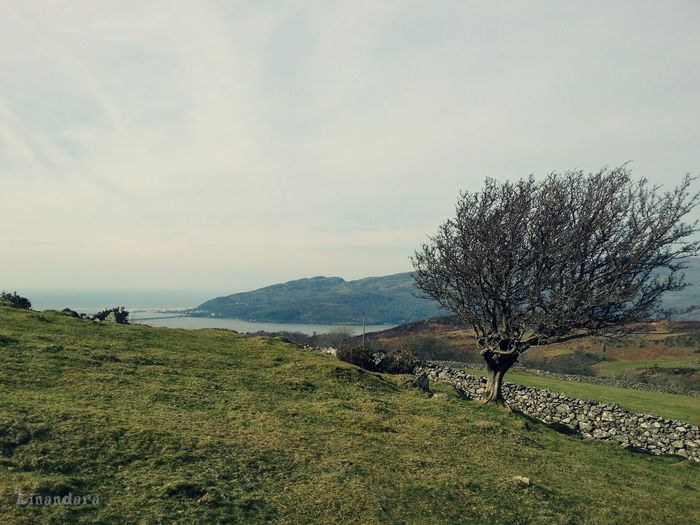 a view of Barmouth from the Hills ... North Wales Mountains Tree