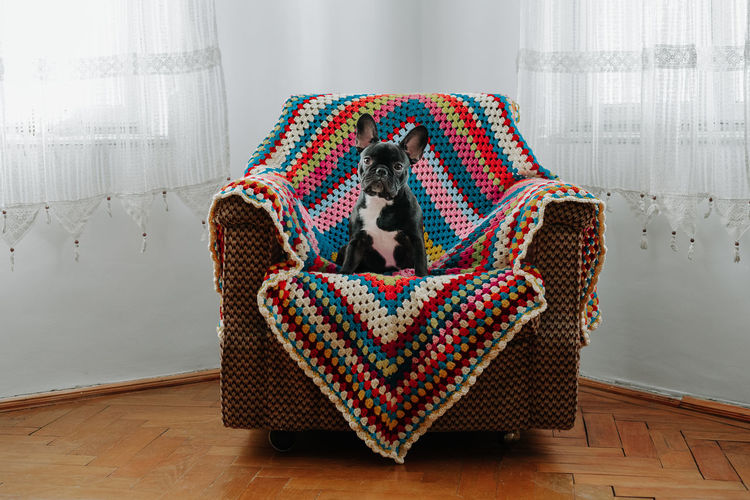 Portrait of dog sitting on chair against wall