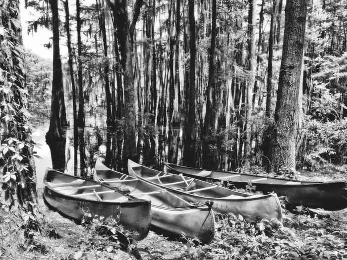 Boats Black And White Camping Woods