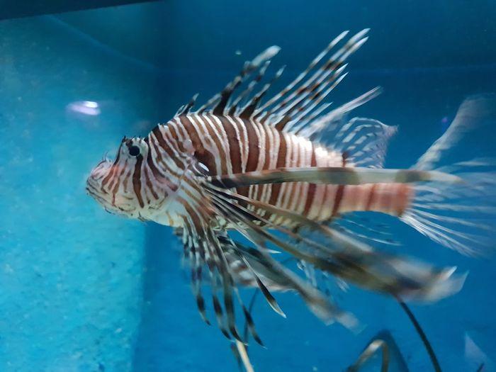 Devilfish Seadevil Fish EyeEm Selects UnderSea Sea Life Underwater Sea Swimming Water Close-up Aquarium