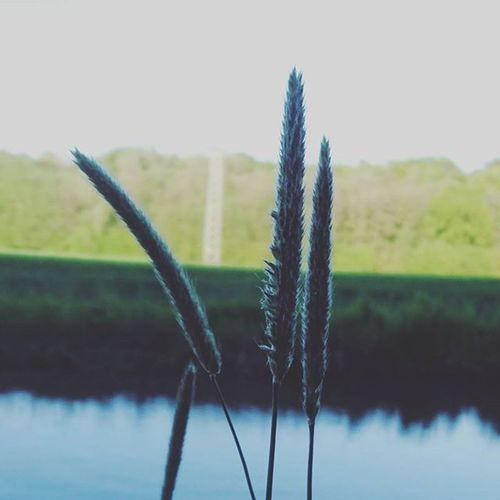 Makro Macro Macrophotography Makrophotography Naturephotography Nature_perfection Nature Water Lake Horizon Bestoftheday Xperiaphoto Xperialove Landscape Landscape_captures Iggermany Igersgermanyofficial Instalike VSCO Vzco