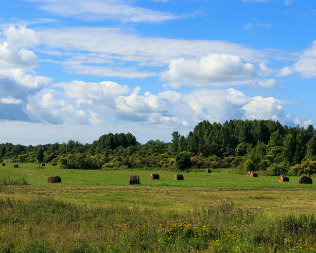 Hay bales on the Siberian field in August. Hay Bale Agriculture Cloud - Sky Day Environment Field Grass Green Color Hay Land Landscape No People Outdoors Rural Scene Sky Tranquil Scene Tranquility