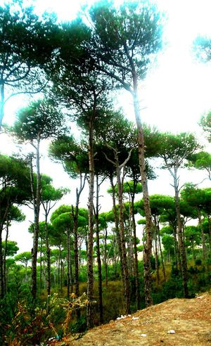 Eye Em Nature Lover Eye Em Best Shots Nature Connected With Nature Hanging Tree Jezzine