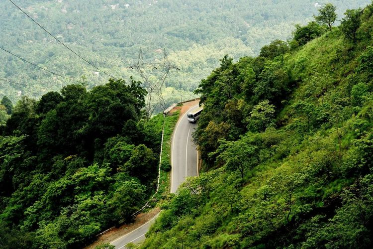 Scenic View Of Forest By Road