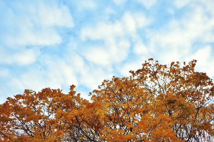 Sky Nature Cloud - Sky Outdoors Day No People Low Angle View Beauty In Nature Close-up Fragility Blue Sky Blue Color Copy Space Clouds Trees London Nature Autumn Colors Autumn Park Leaves