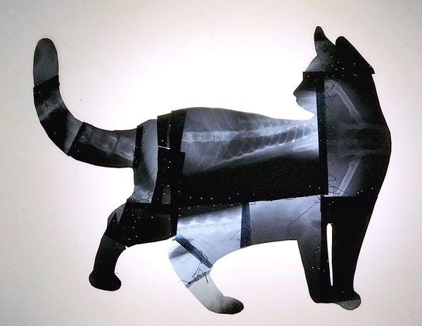 Cat sell art art collection swiss