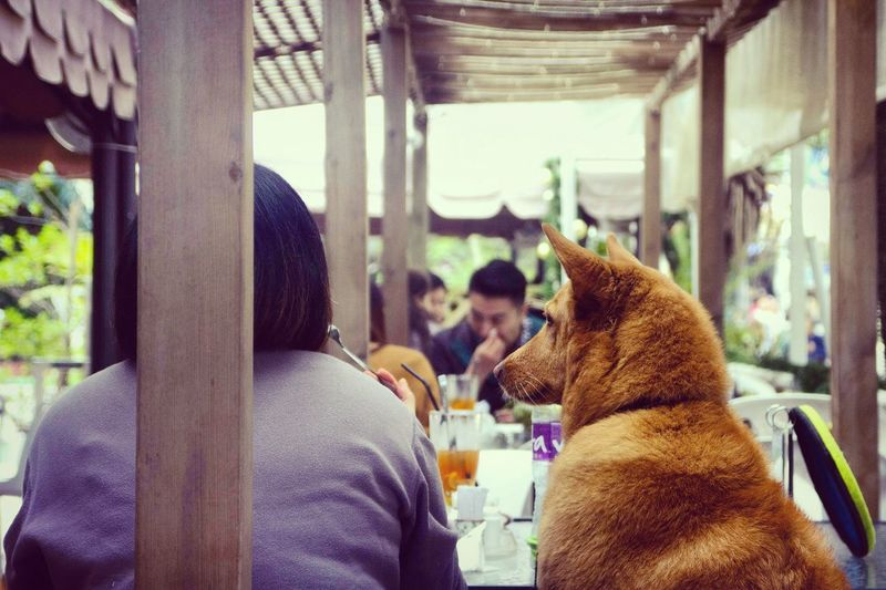 """So close I can taste it!"" Lammaisland HongKong First Eyeem Photo"