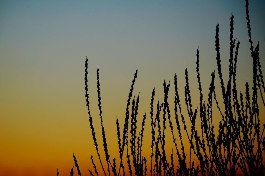 Sunset Silhouette Nature Beauty In Nature Tree Tranquility Scenics Growth Outdoors No People Sky Landscape Day Sunset Silhouettes Sunset_collection Eyeem0711 First Eyeem Photo Beauty In Nature Nature Silhouette Backgrounds Taking Photos