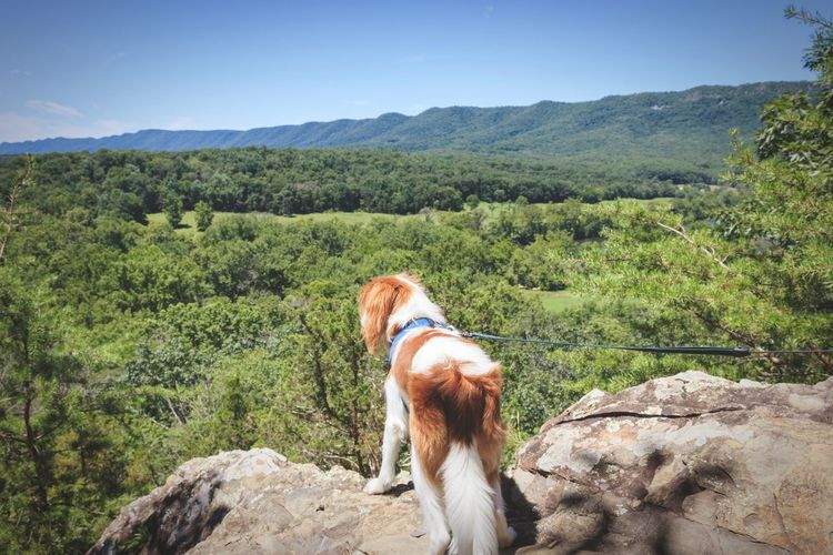 Rear view of a dog on landscape
