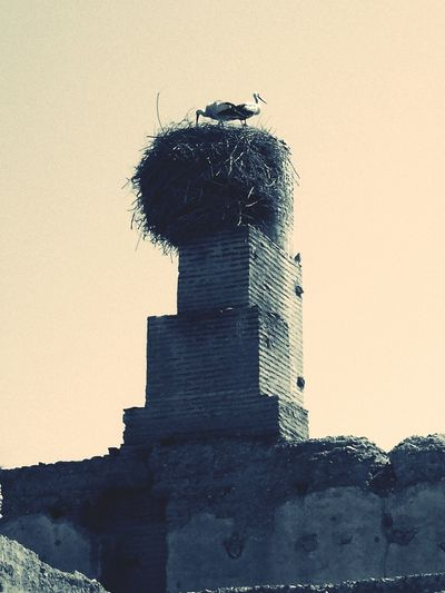 Storks Couple Vintage Stork Family On The Chmney 2 Birds Two Birds Higher Nest Fauna EyeEm Best Shots + Best Edit EyeEm Apps @Ced_u26CC_BY_ND In Marrakech , Morocco