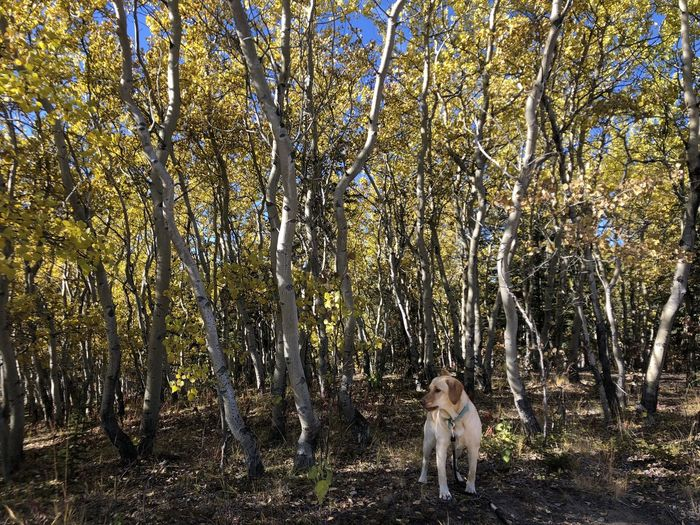 Portrait of dog standing in forest