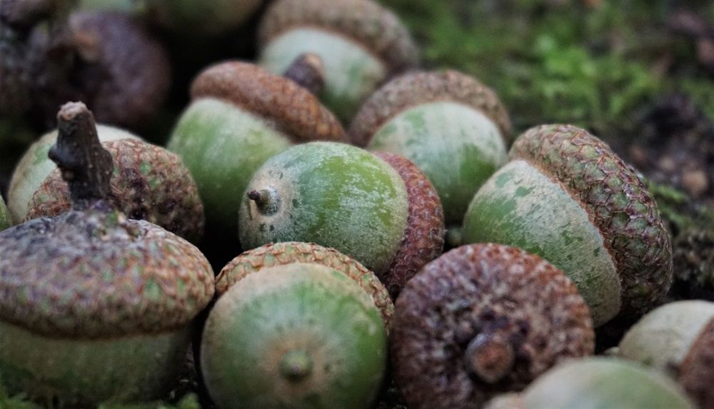 50+ Tropical Fruit Pictures HD | Download Authentic Images