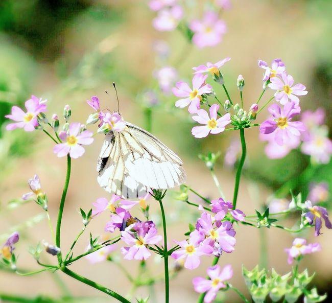 かくれんぼ♪ 日だまり Springtime 蝶々 Butterfly EyeEm Nature Lover EyeEm Best Shots Beauty In Nature Taking Photos さんぽ道 Insect Collection Butterfly - Insect My Point Of View Butterfly Collection EyeEm Gallery Eyemphotography EyeEm Best Shots - Nature