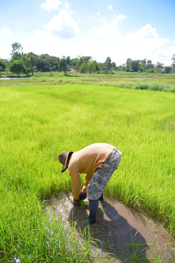 Grow rice Plant Grass Green Color One Person Land Field Real People Nature Growth Bending Full Length Landscape Day Side View Men Lifestyles Rural Scene Sky Environment Outdoors Farmer Shorts