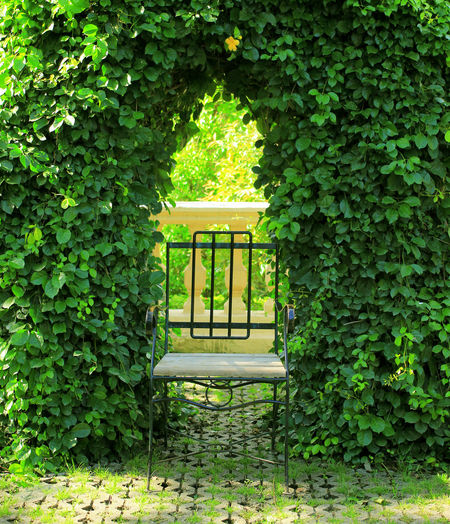 Plant Green Color Growth Ivy Nature Leaf Plant Part Architecture No People Day Outdoors Tree Creeper Plant Built Structure Foliage House Lush Foliage Beauty In Nature Building Exterior Building Hedge Summer Spring