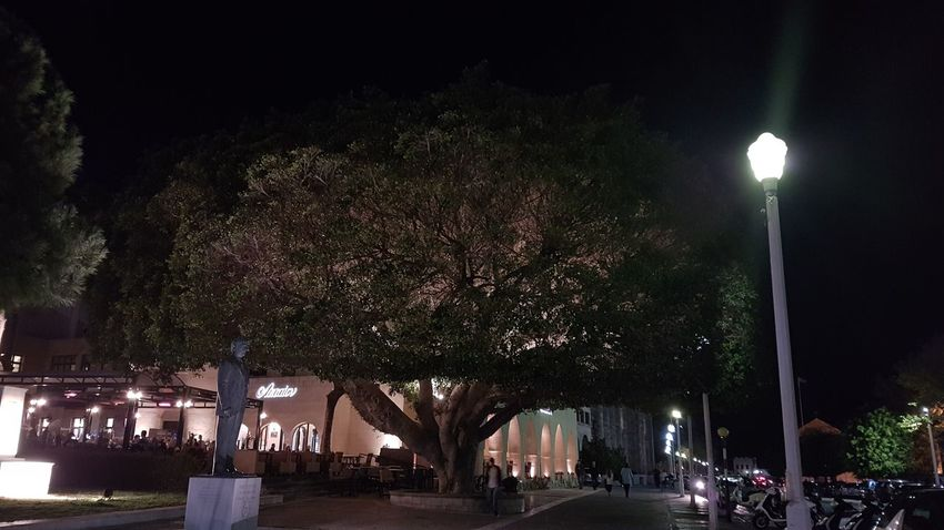 Night Tree Tree Branches Tree Of Life City Outdoors Beauty In Nature No Filter, No Edit, Just Photography Walking Enjoy Life Rhodes, Greece Exploring Capture The Moment Greek Beauty Followme Follow4follow Followback