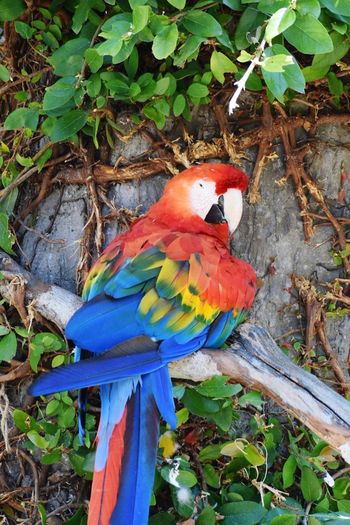 Zoophotography Zoobirds Macaw Beautiful Nature Zoo Animals  Nature Photography Colorful Birds