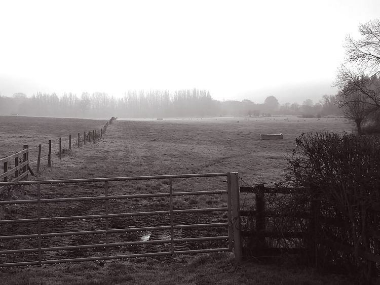 Fence Tree Ranch Nature Fog Tranquility Outdoors Landscape Sky No People Day Beauty In Nature Dew Walk Black&white Morning