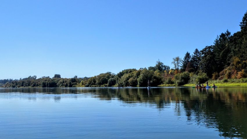 Partner Collection Selected For Partner River Water Tree Plant Sky Clear Sky Lake Reflection Tranquil Scene Copy Space Scenics - Nature Growth Beauty In Nature Nature Tranquility Day Waterfront Outdoors Blue