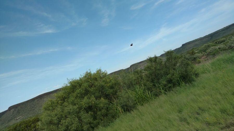 Hawkflying Hawkinfullpursuit roadtoBigBend