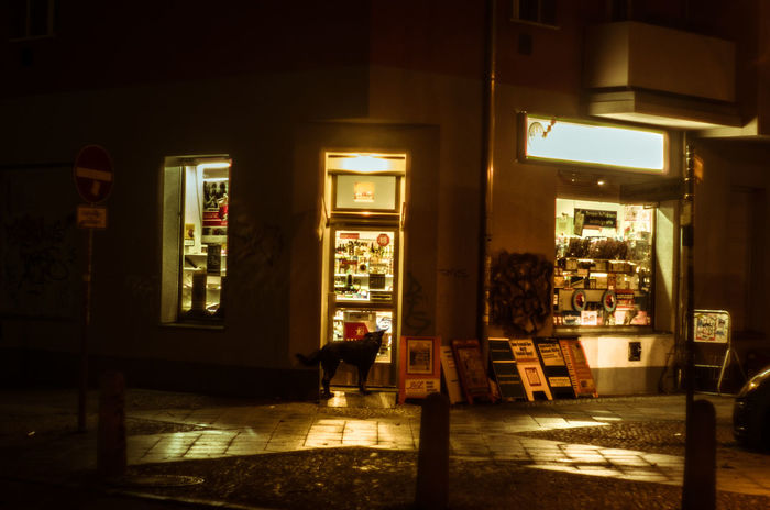 Berlin Dog Light And Shadow Night Old-fashioned Späti Store Waiting