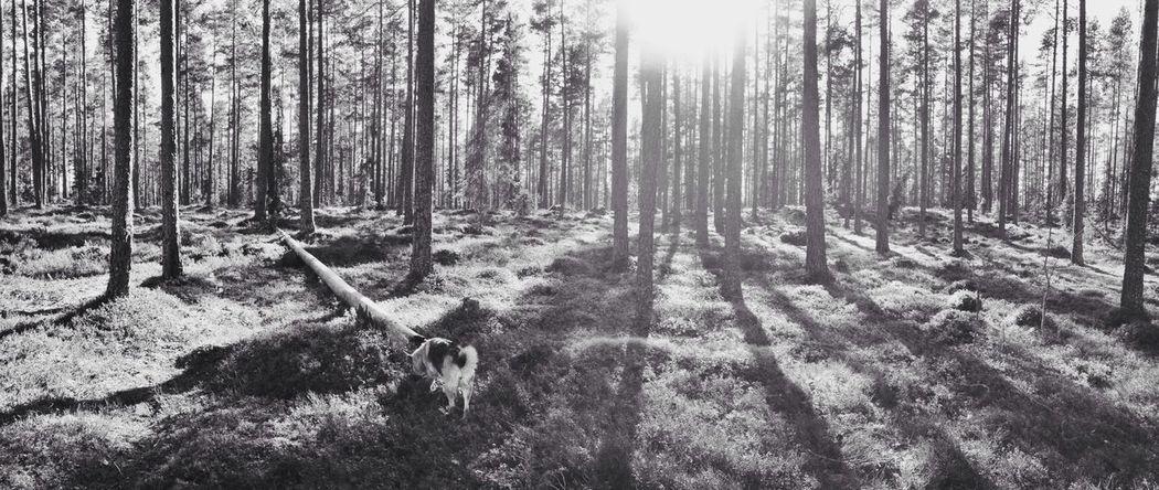 Walking Around Soaking Up The Sun Panorama Blackandwhite