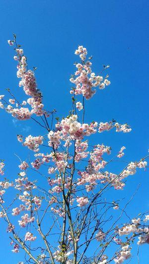 Spring in my