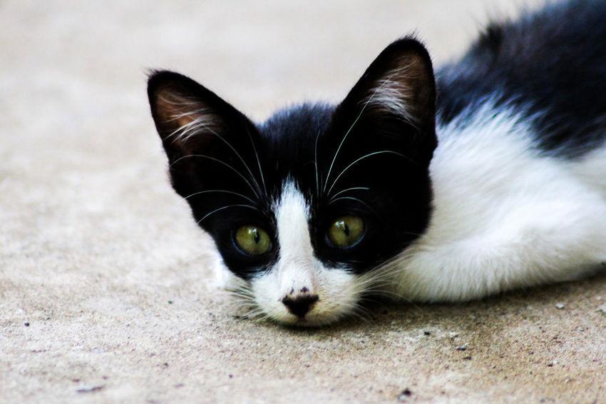 Animal Animal Lover Black Cat Cats Cute Street Streetphotography EyeEmNewHere