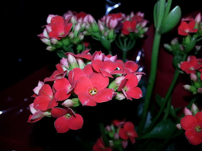 Blooming Close-up Flower Fragility Freshness Nature Petal Pink Color Plant Red Rhododendron