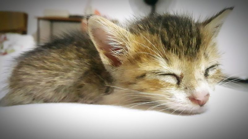 Orphan Kitten Kittens Of Eyeem Kitten 🐱 Kitten Kittenoftheday 🐱 My Citten Is A Very Cute 🐱 Kittenlovers Kittenlove Kitten Love Kitten Adorable Kitten Photography Sleeping Kitten Sleeping 🐱