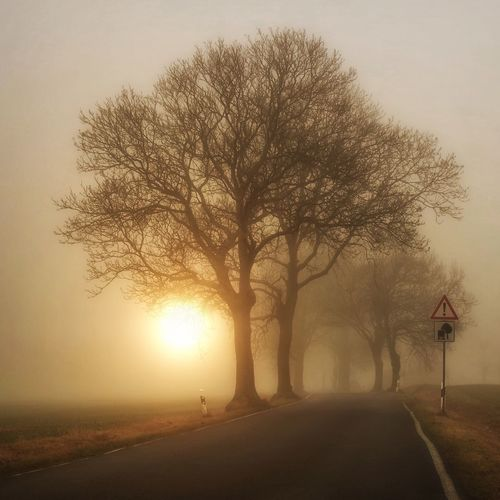 Beauty In Nature Road The Way Forward Fog Sunset Nature Tree Silhouette Fog Foggy Mist Tranquility Tranquil Scene Bare Tree Outdoors