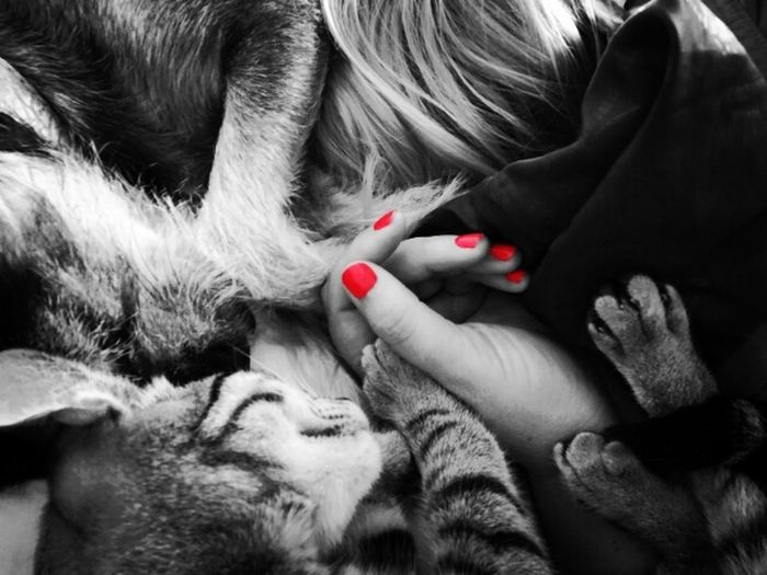 Siestas... Human Body Part Pets Domestic Animals Adults Only Women Only Women Nail Polish Colorful Splash Of Color Bwphotography Bw-collection Bw_photooftheday Blackandwhite One Young Woman Only People Cats Cats Of EyeEm Dogs Dogs Of EyeEm Patas Word_photography Perrosfelices One Animal Mammal