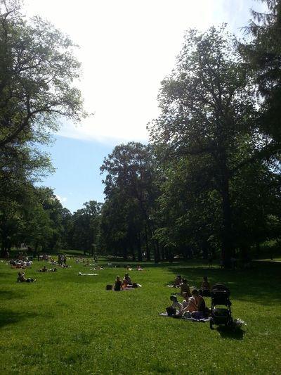 den hoved norske sommersporten, få brunfarge / principal esport noruec d'estiu, torrar-se al sol Oslo Norge