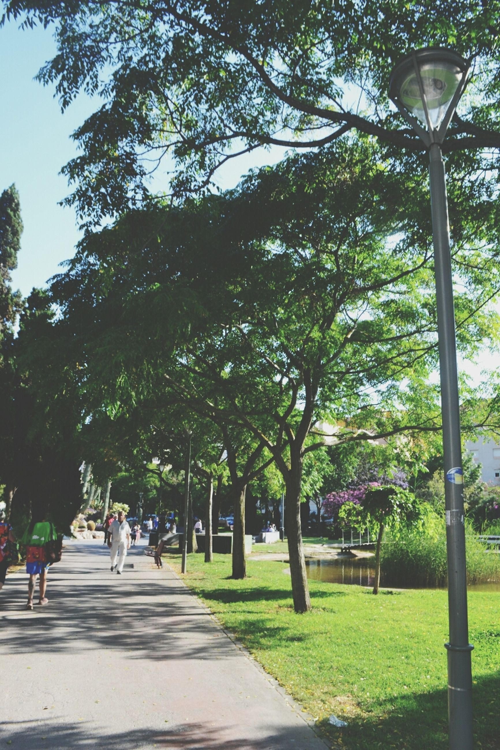 tree, street light, park - man made space, green color, grass, lighting equipment, growth, footpath, incidental people, nature, sky, sunlight, the way forward, park, outdoors, leisure activity, branch, day, shadow